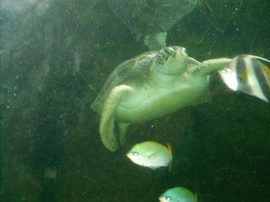 Oceanarium ภาพถ่าย