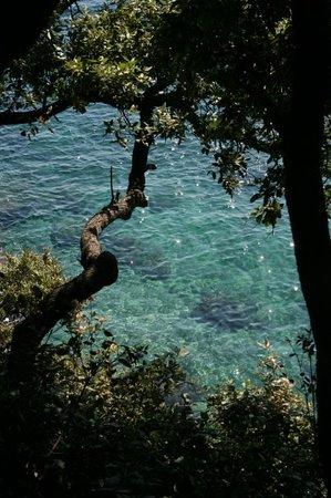 パラグルーツァ島
