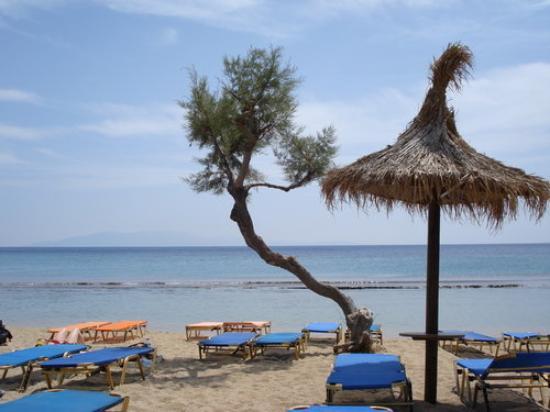 ميكونوس, اليونان: Spiaggia di Paraga