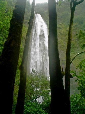 Pipiwai Trail: waimoku falls