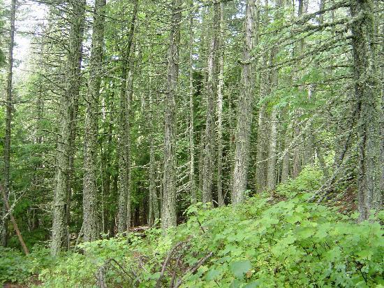 Mountain Trek Fitness Retreat & Health Spa: A Walk in the Woods