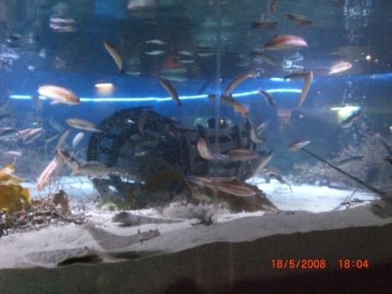 L 39 int rieur de l 39 aquarium picture of aquarium for Aquarium interieur