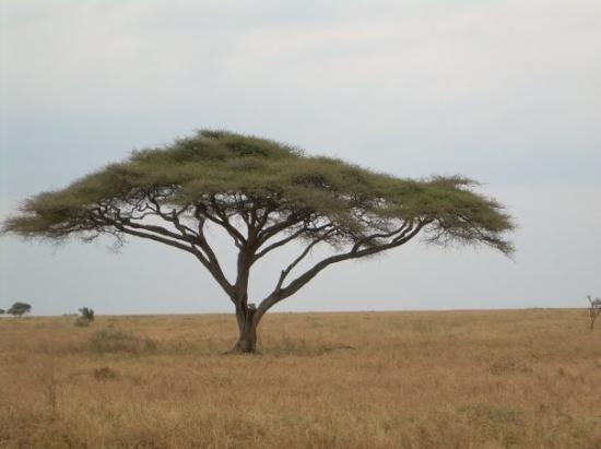 Foto de Parque Nacional del Serengeti
