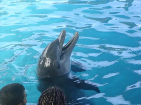 Ocean World Adventure Park: The dolphin dance jejeje