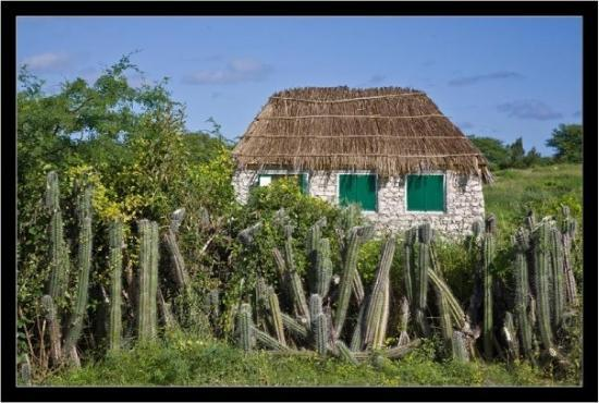 Traditional bonaire house picture of bonaire caribbean - The dive hut bonaire ...