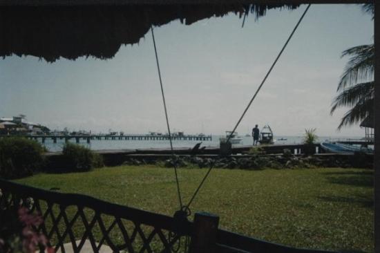ปลาเซนเซีย ภาพถ่าย