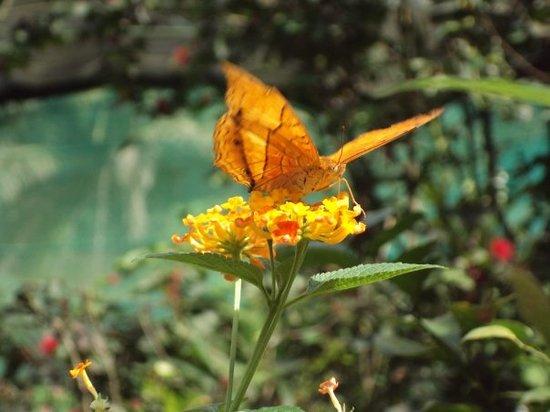 Kuala Lumpur Butterfly Park