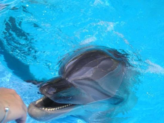 SeaWorld San Antonio: My hand reaching down to stroke my first ever dolphin - Seaworld Texas