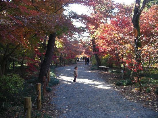 Niiza, Giappone: ゆっくりお散歩