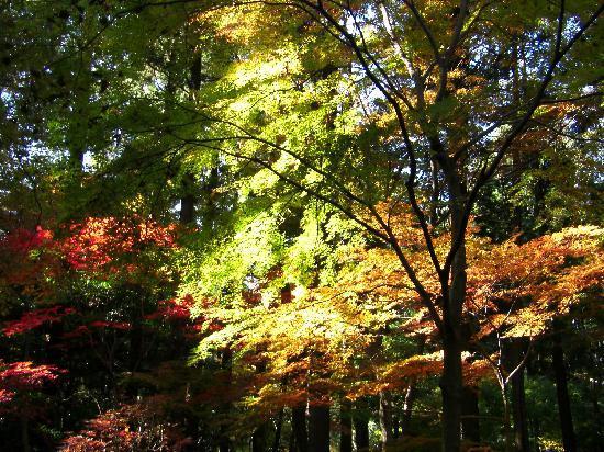 Niiza, Giappone: 幻想的