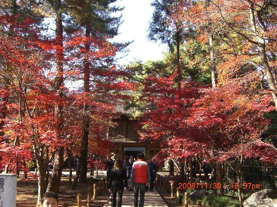 Niiza, Giappone: ここから別世界