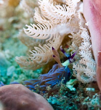 Portofino Beach Resort : Nudibranch