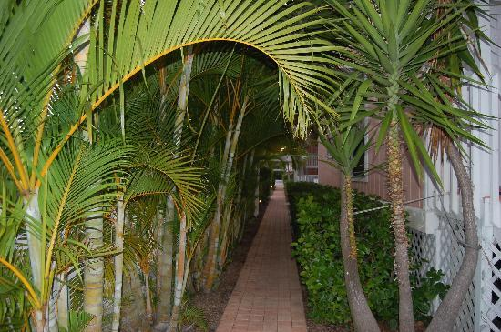 Turtle Bay Condos: Walkway to unit