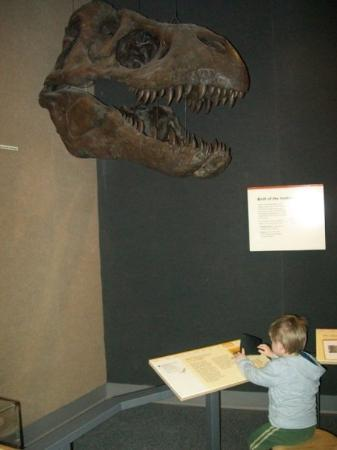 Museum of the Earth: Matthew didn't like the T-Rex very much, so he ignored it...
