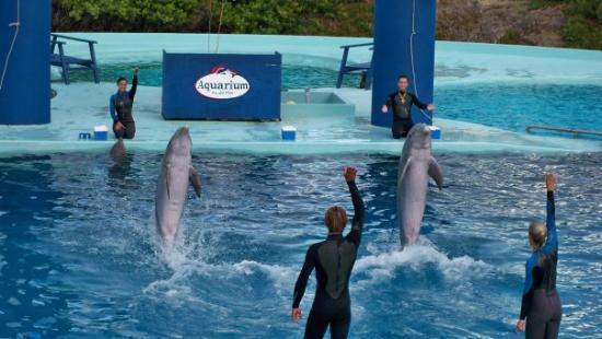 Aquarium: dolphins