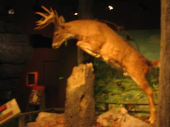 Anniston Museum of Natural History Photo