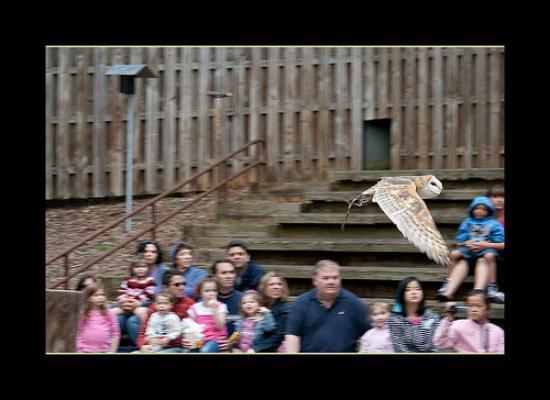 Zoo Atlanta: In Flight