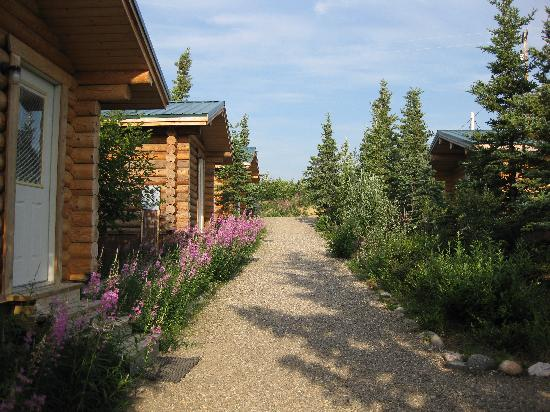 Park's Edge Log Cabins: Nicely landscaped row of cabins