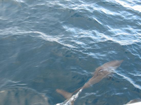 The Sun Siyam Iru Fushi Maldives: Sortie dauphins