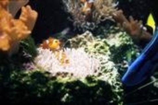Fish Aquarium Chicago : worm like fish - Foto di Shedd Aquarium, Chicago - TripAdvisor