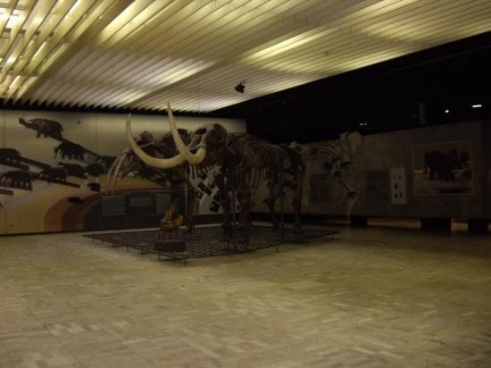 Senckenberg Natural History Museum (Naturmuseum Senckenberg) : Wooly Mammoth