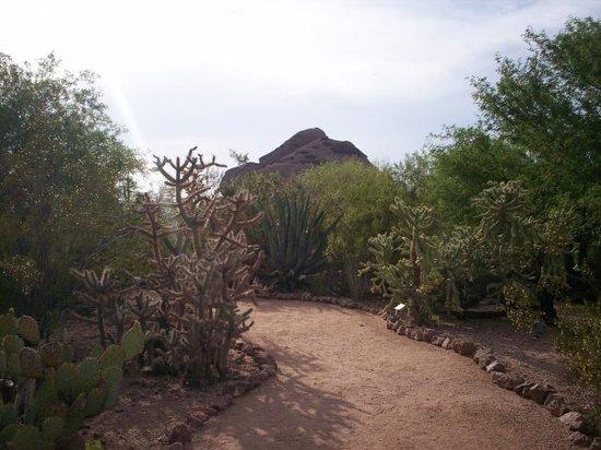 Tucson, AZ : Desert Garden 3