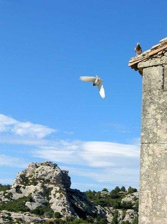 Avignon Photo