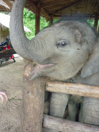 Thai Elephant Conservation Center: she was beautiful