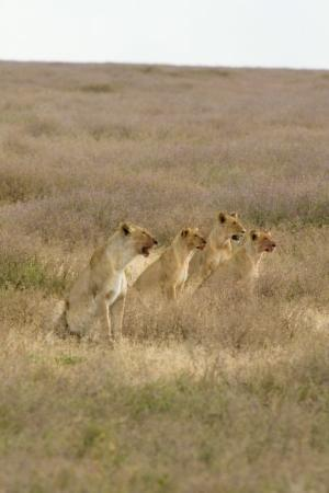 Serengeti National Park Photo