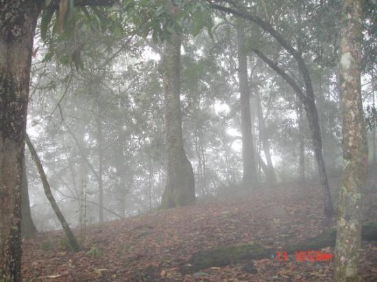 Fusagasuga, Colombia: Robledal-Quininí