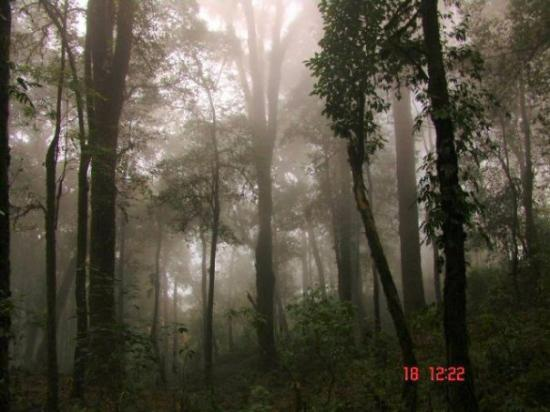 "Kalimpong, Ινδία: It is the ""Lole Gao"" Forest."