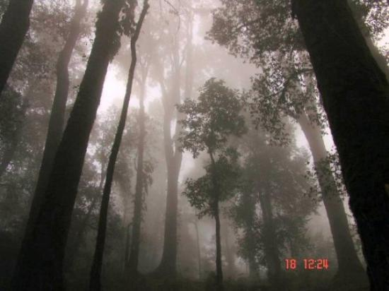 Kalimpong, India: Misty Mysterious Forest