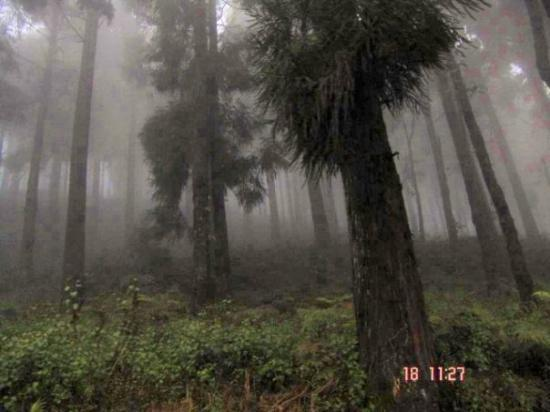 "Kalimpong, Ινδία: Taken from the Running jeep. We were going to ""Lole Gao"" Forest."
