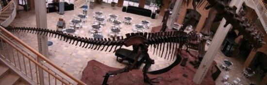 Fernbank Museum of Natural History: EL T REX DESDE ARRIBA