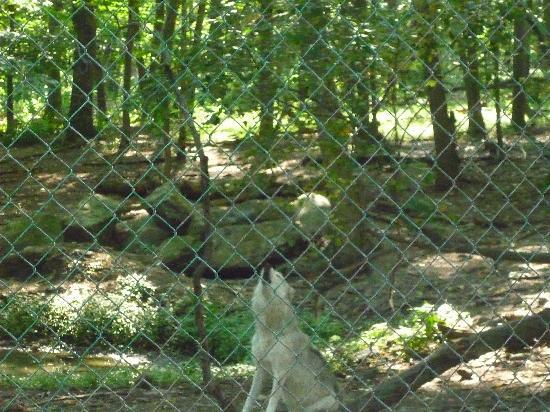 Lakota Wolf Preserve: wolfs