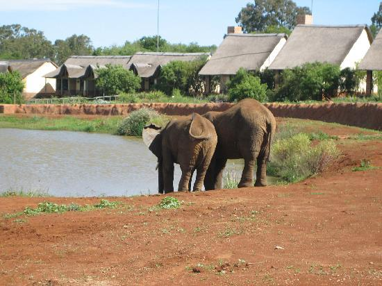 Magaliesburg, Sydafrika: elephant dam which you can see from the room