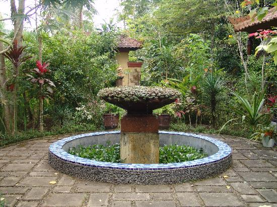 beautiful garden of sudanita homestay