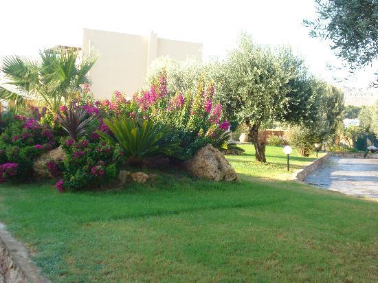 Mikri Poli Rhodos Resort: Bouganville a cespuglio