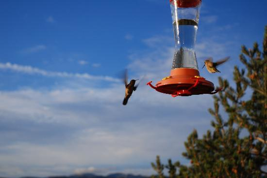 Super 8 Salida: Beautiful hummingbirds