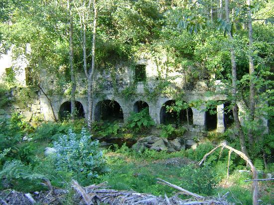 walk through the forest in Cervo