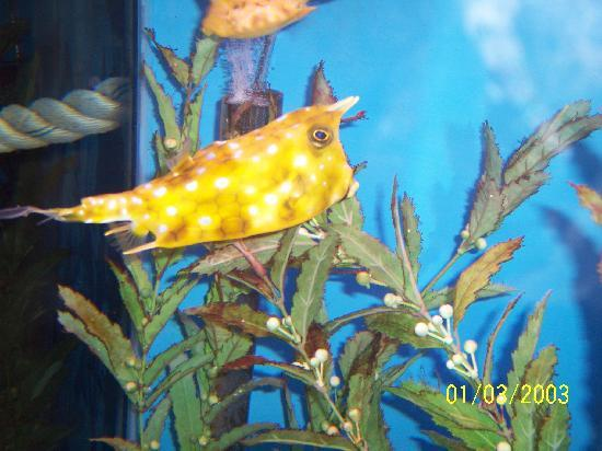 Days Inn Seaside Heights/Toms River: aquarium