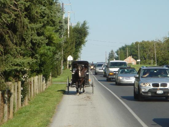 Comfort Inn Lancaster - Rockvale Outlets: Buggy Ride in PA Amish Country