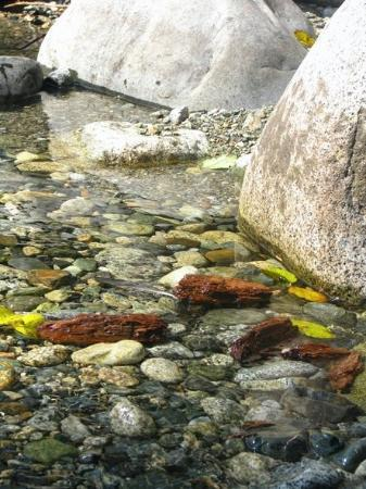 Lynn Canyon Park: The water was beautiful