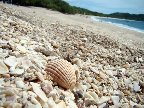Playa Conchal 사진