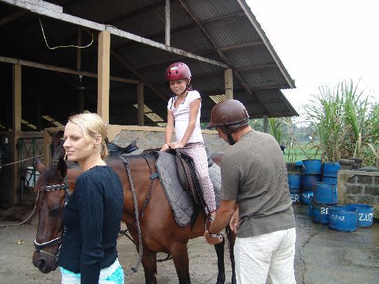 Tabanan, Indonesië: at the stables