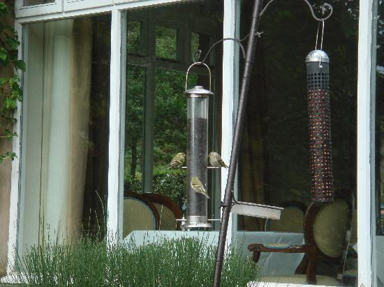 The Borrowdale Gates Hotel: Birds at breakfast