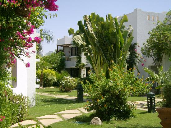 Delta Sharm Resort: Beautiful garden views just outside our room