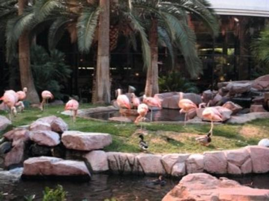 Inside The Flamingo Hotel They Have Real Flamingos Las Vegas Nv United States Picture Of