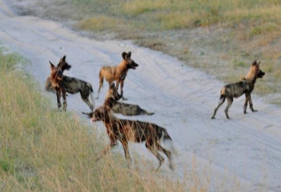 Moremi Game Reserve ภาพถ่าย