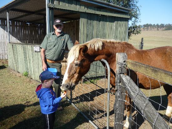 Beaudesert, Australia: Feeding the horse Dude